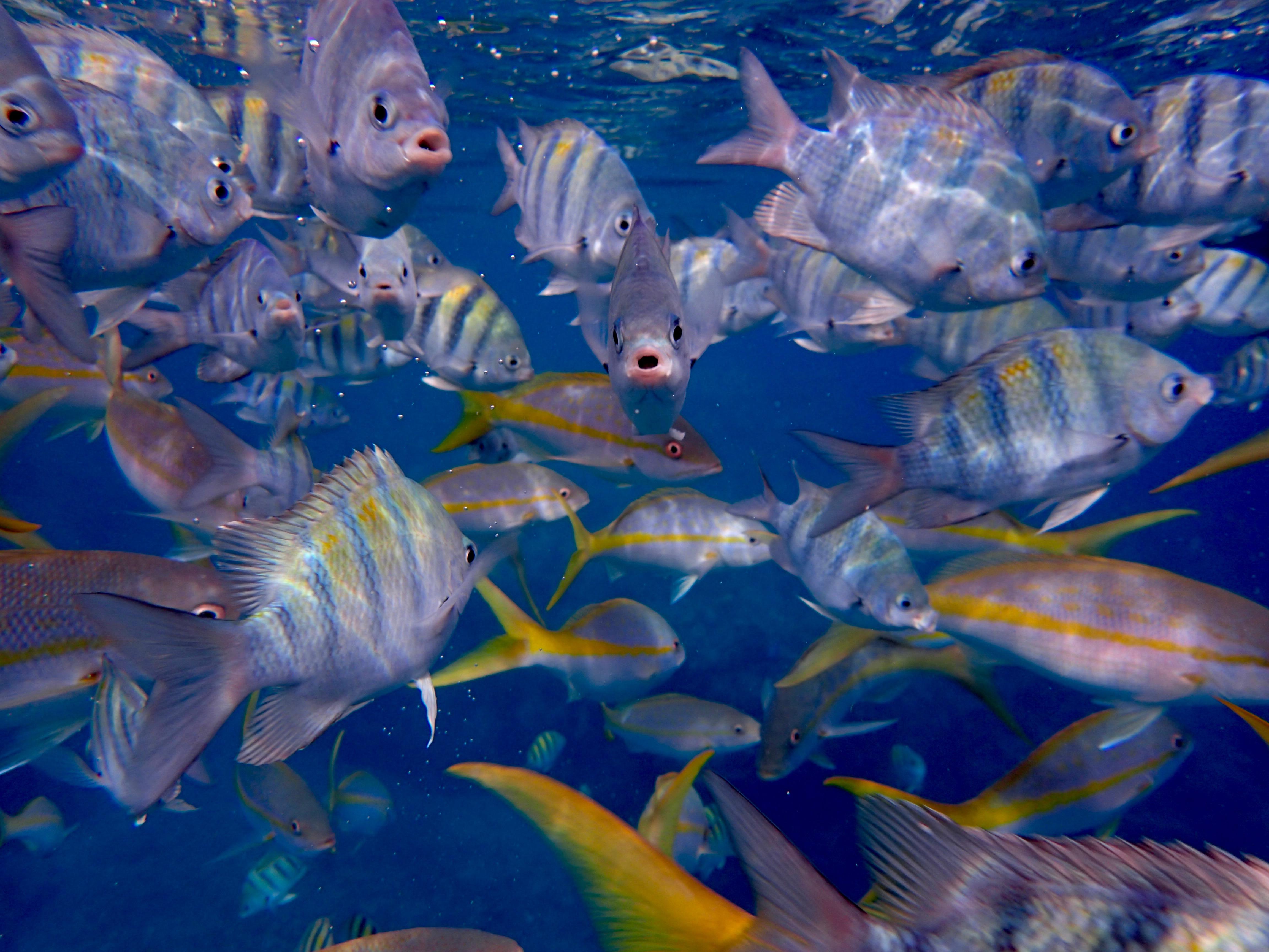 A lotta fishies