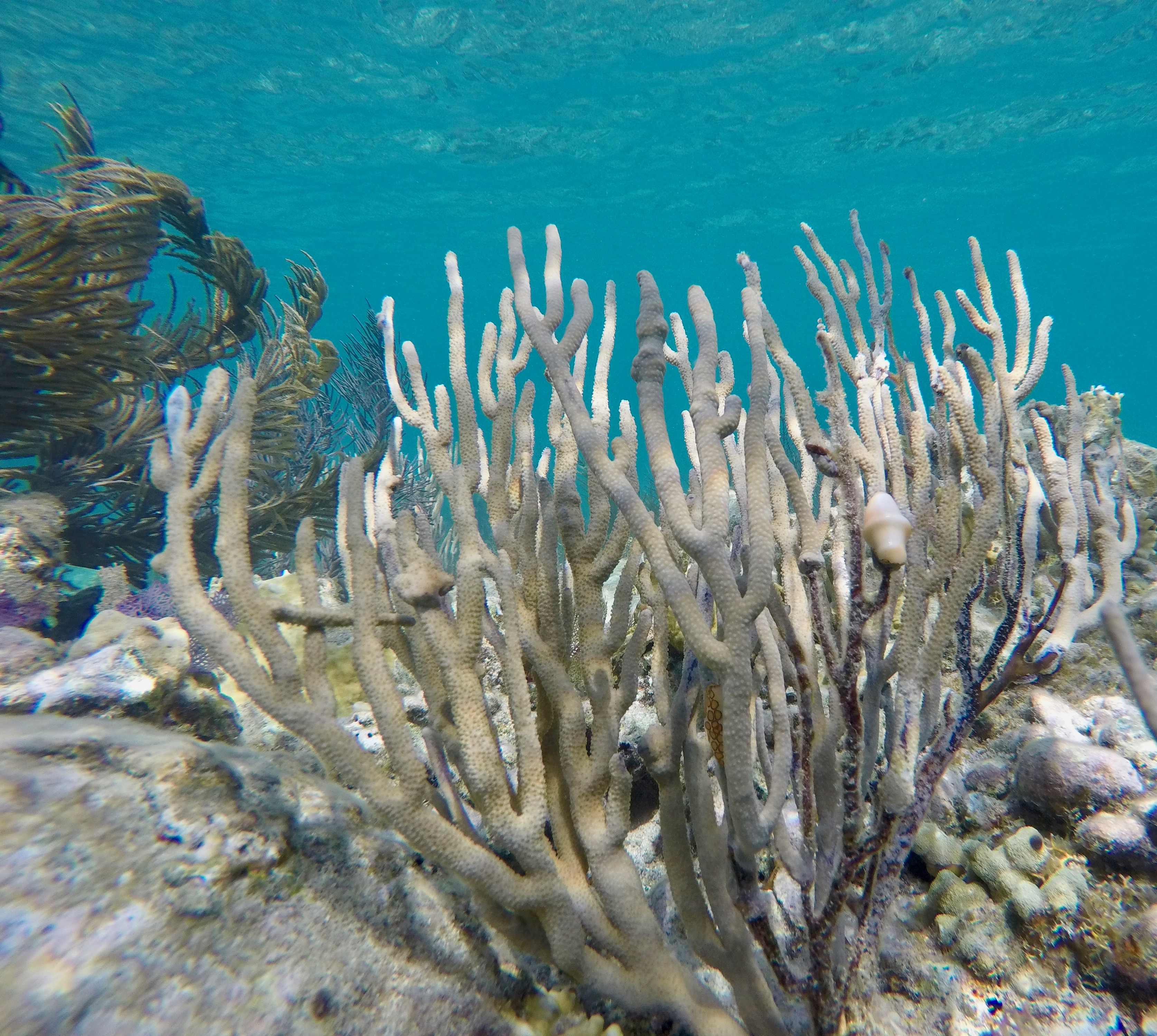 Soft Corals off STJ