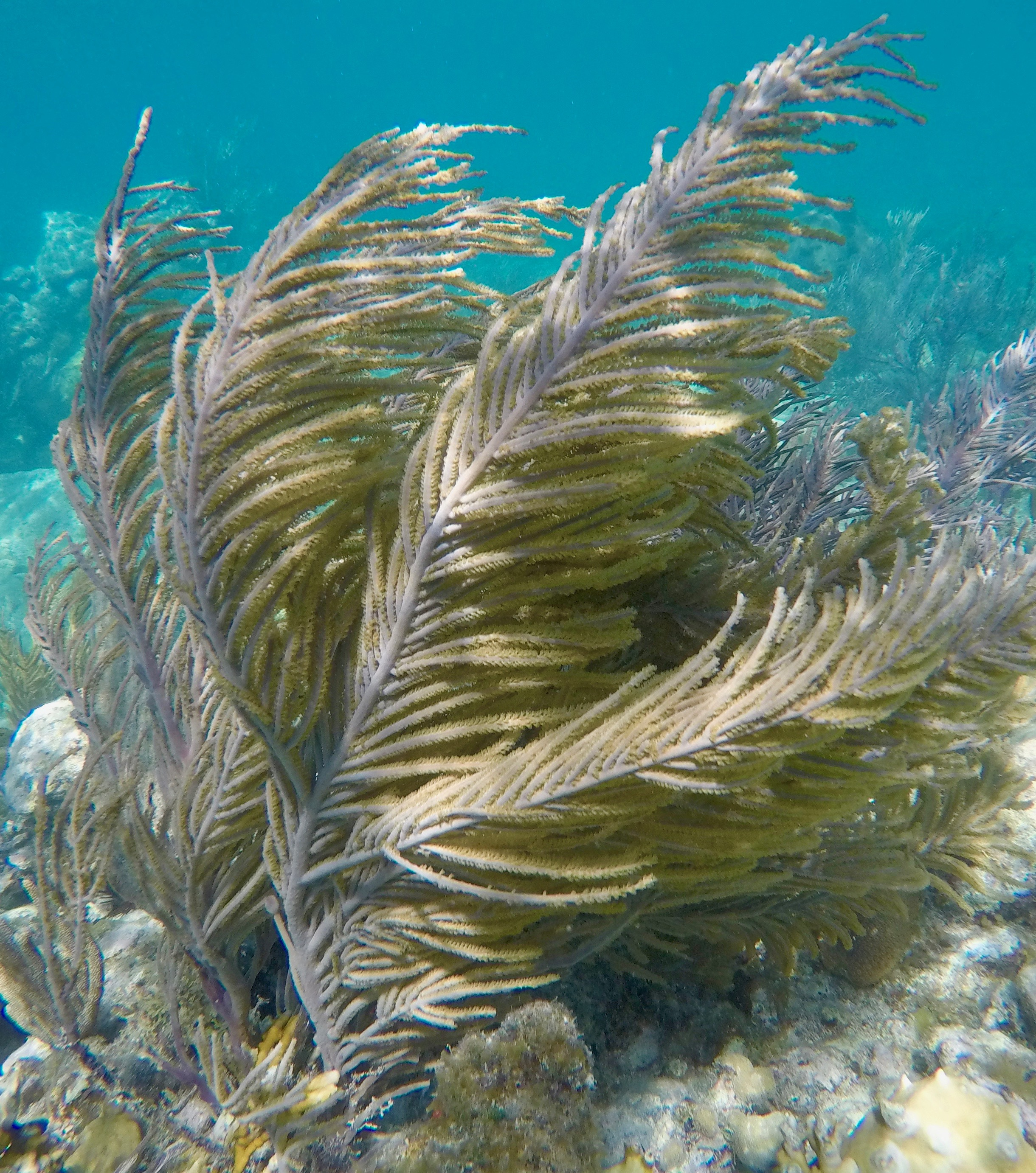 Soft Corals still abound