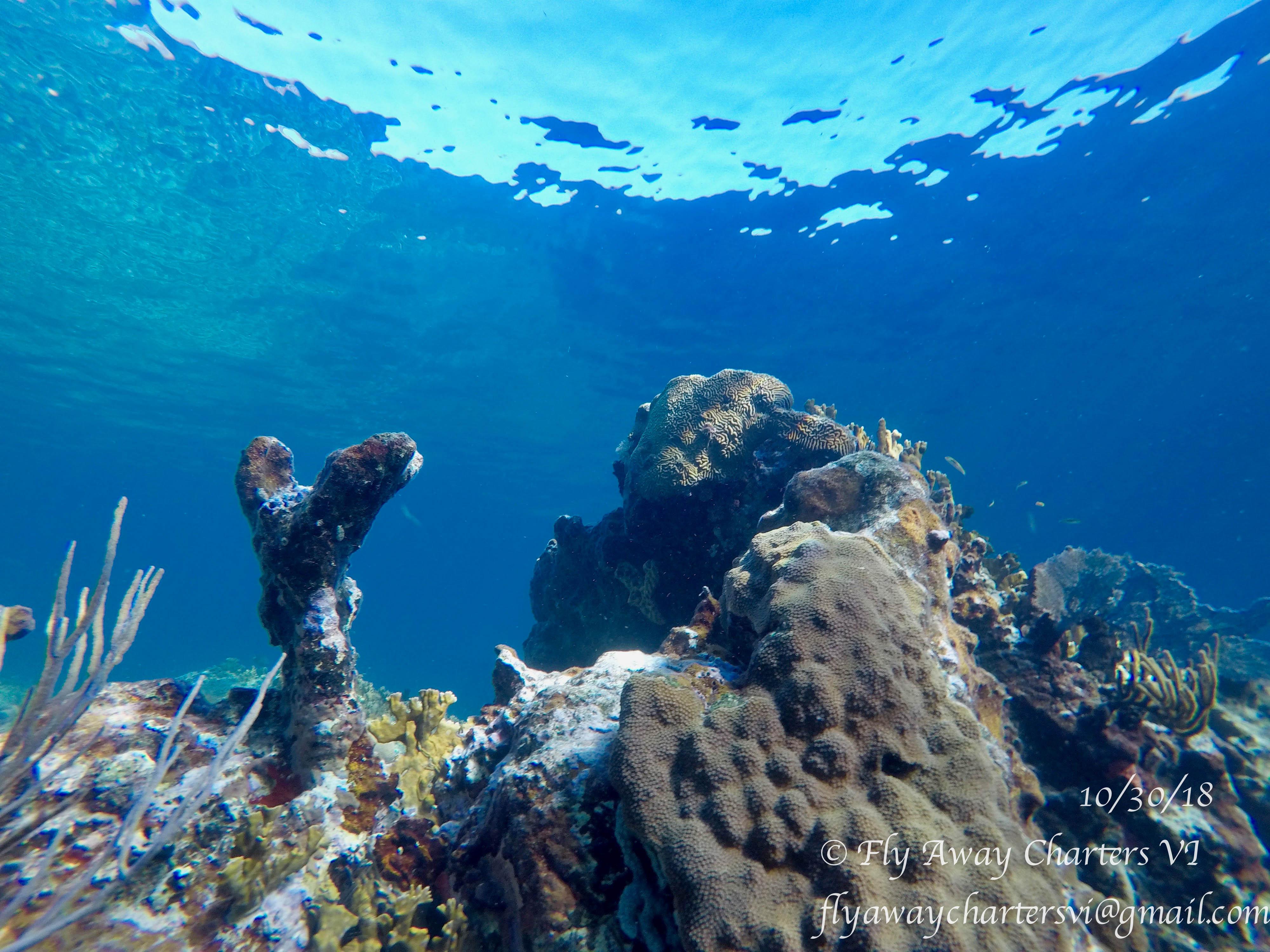 Underwater Vibrance!