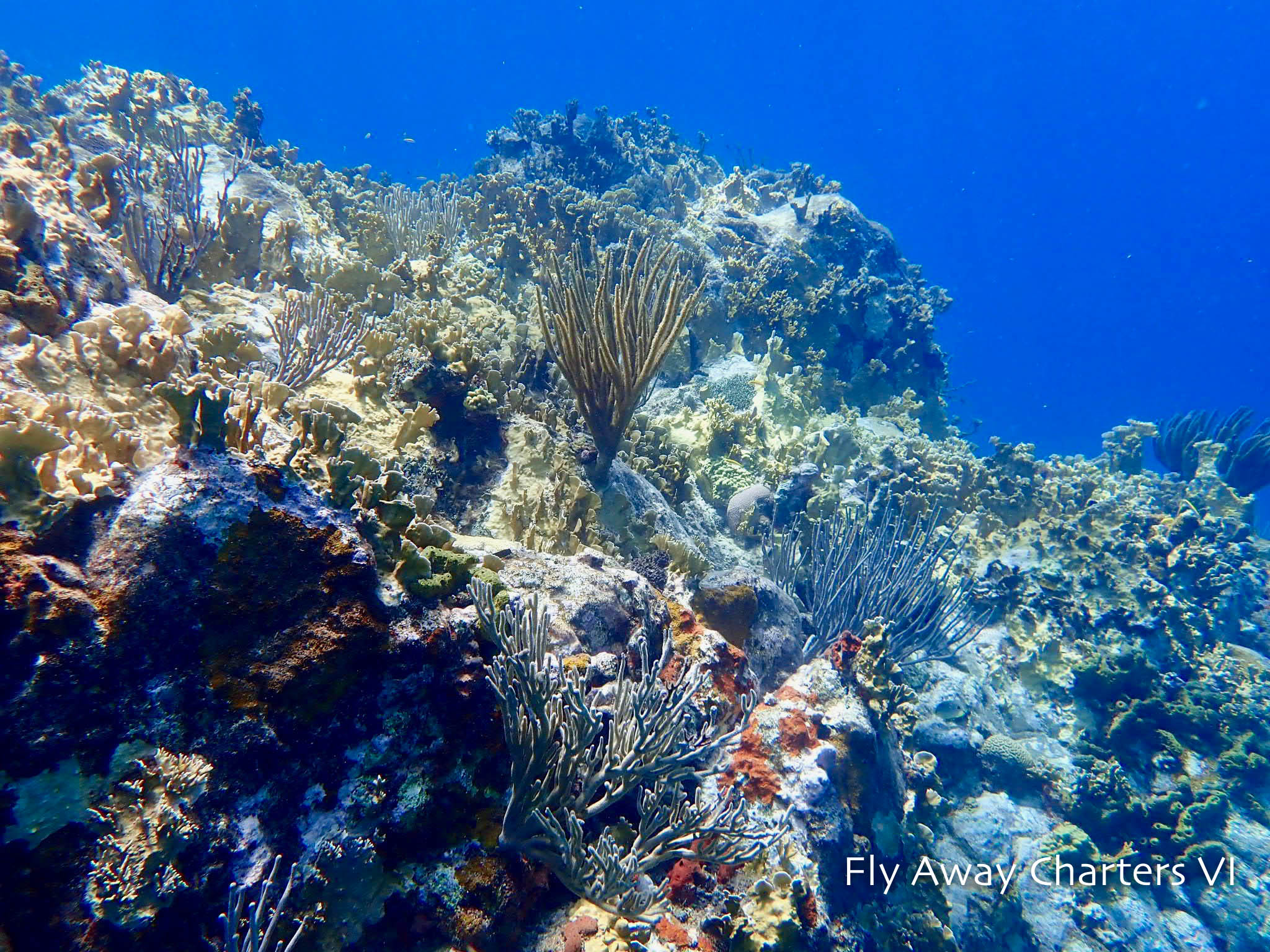Vibrant Coral Reef in USVI