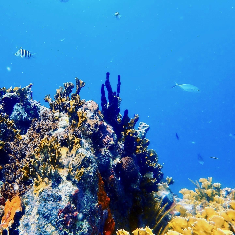 Coral Reef off STT