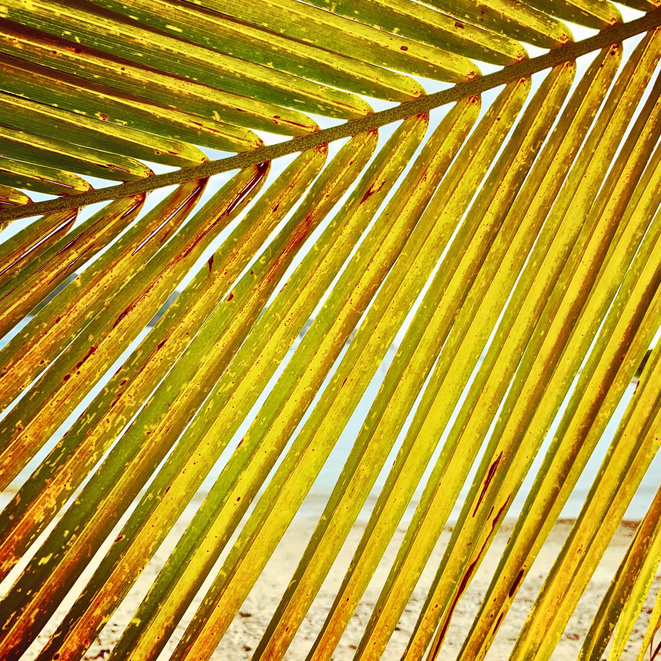 Palm at Norman Island, BVI