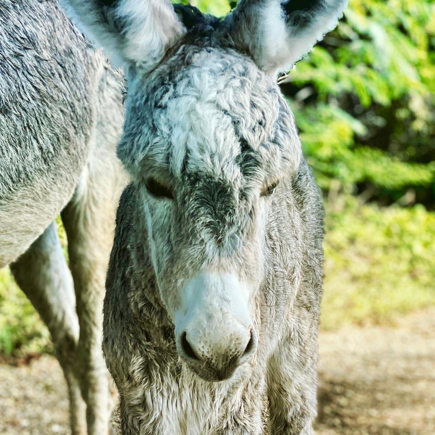 Baby Donkey on East End