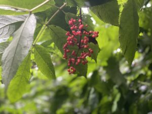 Berries - not the eating kind though